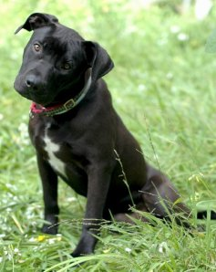 Ben | Rocket Dog Rescue www.rocketdogrescue.org